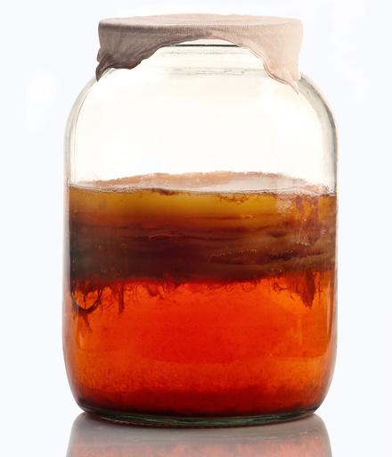 Kombucha tea fermenting