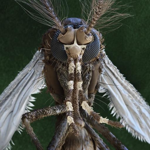 Aedes aegypti mosquito, SEM