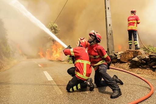 Forest fire in Gois region