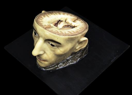 Head and brain model, 18th century