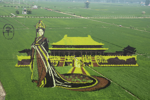 Rice saplings of different colours and varieties are planted to form a 3D image of Mi Yue, a character from the TV series