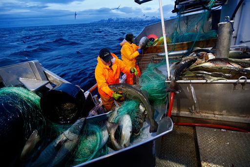 flere fisker i havet dating fyrene hvem bare feste opp