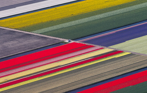 Aerial view of flower fields near the Keukenhof park, also known as the Garden of Europe in Lisse