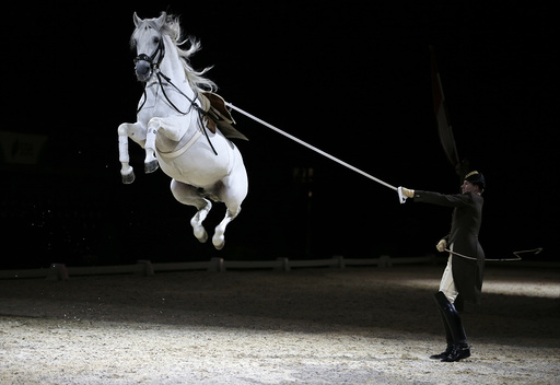 Riders and their horses of the Spanish Riding School of Vienna perform a dress rehearsal for the media at the SSE Arena in London