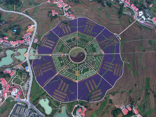An aerial view of plants arranged in the shape of the Eight Diagrams is seen at a park in Zunyi