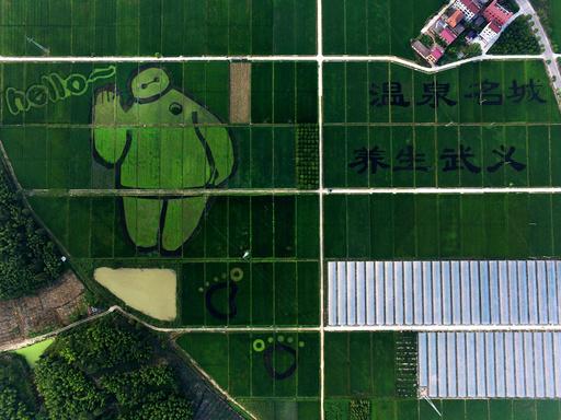 #CHINA-ZHEJIANG-WUYI COUNTY-CREATIVE PADDY FIELDS(CN)