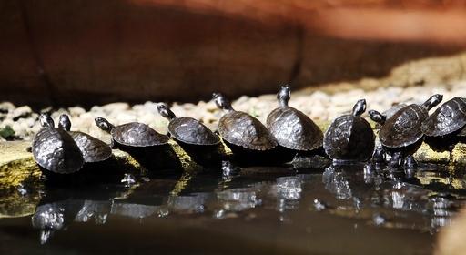 Release of 100 turtles in Rio Claro