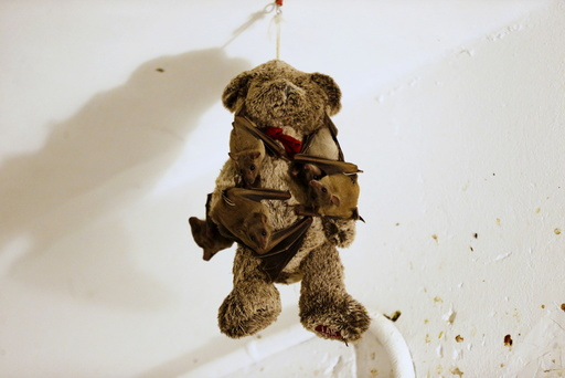 Injured Egyptian fruit bats hang on a teddy bear at the home of Israeli woman, Nora Lifschitz, 28, in Tel Aviv