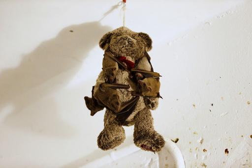Injured Egyptian fruit bats hang on a teddy bear at the home of Israeli woman, Nora Lifschitz, 28, in Tel Aviv
