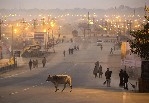 A cow crosses a road past municipal corporation sweepers cleaning road leading to the banks of the Ganges river ahead of the
