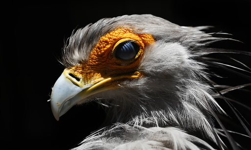 Largest bird park in Africa
