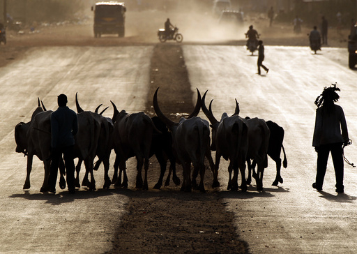 Southern Sudanese men cross a street with cattle during sunset in Juba