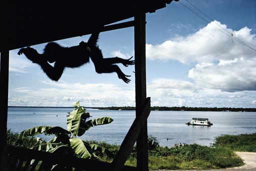 SOUTH AMERICA. Amazonas.