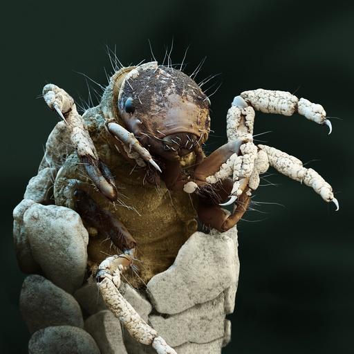 Caddisfly larva, SEM