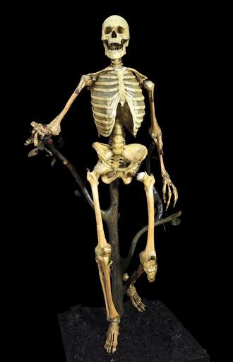 Anatomical skeleton model, 18th century