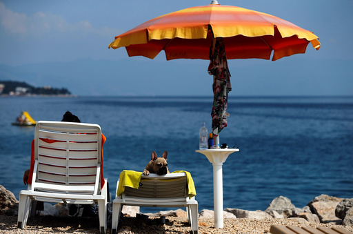 A dog is seen at dog beach and bar in Crikvenica