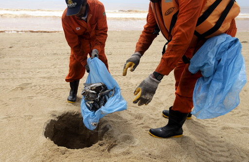 Local fishermen working for a company contracted by Samarco mine operator, work on the clearing of dead fish found on the beach of Povoacao Village
