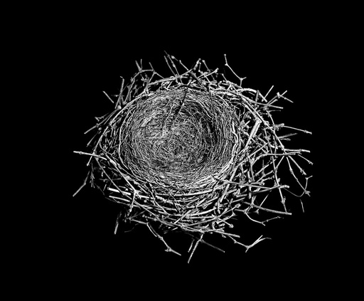 Birds nest made from twigs