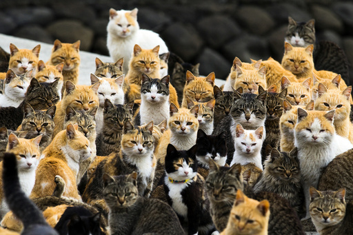 Cats crowd the harbour on Aoshima Island in the Ehime prefecture in southern Japan