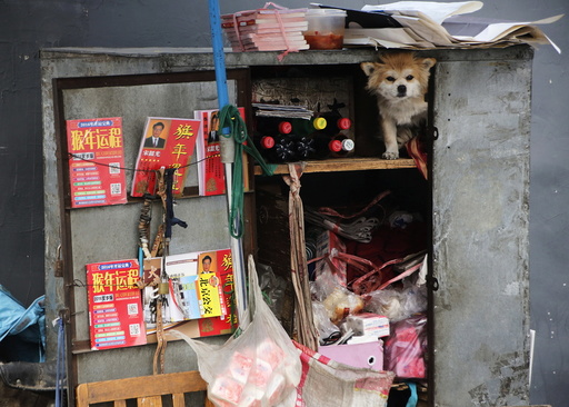 A dog sits in a street vendor's trunk on a bicycle in Beijing