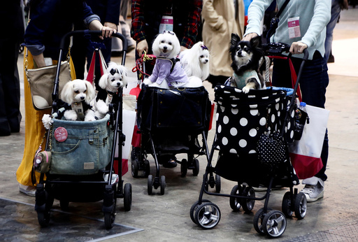 Visitors carry their pet dogs on pet strollers during Interpets in Tokyo