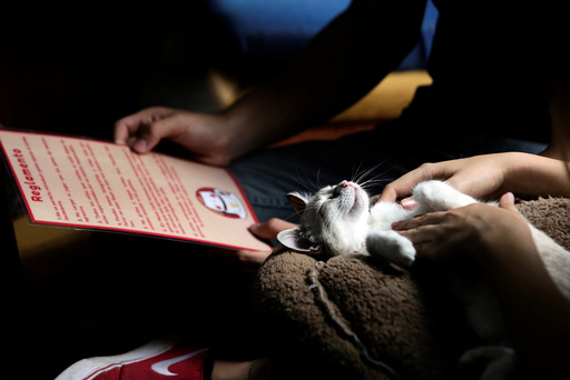 A customer pets a cat while another looks at a menu inside