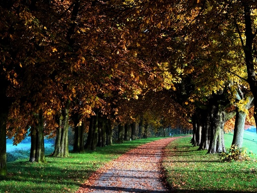 The Horse-Chestnut Avenue in authum colours