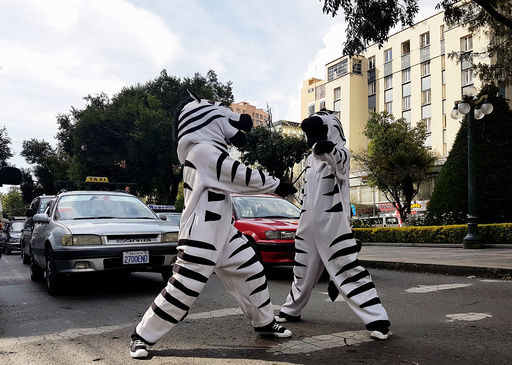 Residents dressed as a zebra perform in the centre of La Paz as part of a Road Education Program