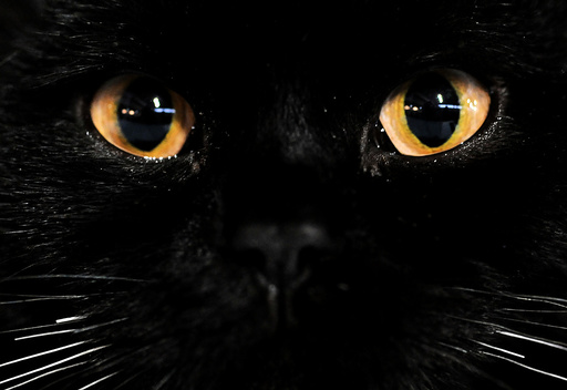 RUSSIA-ANIMALS-PETS-CAT