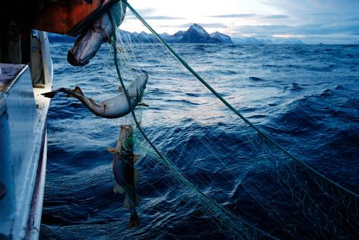 flere fisker i havet dating jordanske kultur Dating