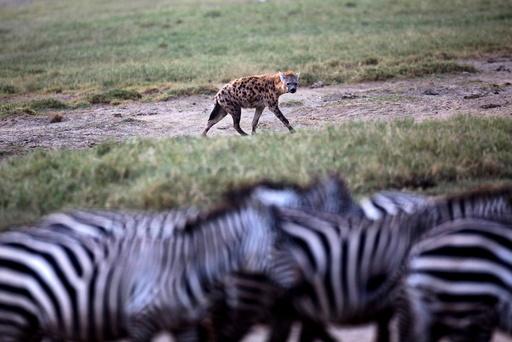 Wider Image: Earthprints: Lake Nakuru