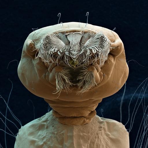 Aedes aegypti mosquito larva, SEM