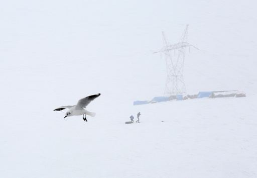 A seagull is seen during a snowstorm in La Cumbre