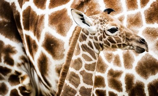Giraffe in Amsterdam zoo