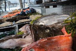 Lakseeksporten for mars sørget for historiens nest beste resultat i et første kvartal for Norges sjømatnæring. Foto: Mariam Butt / NTB