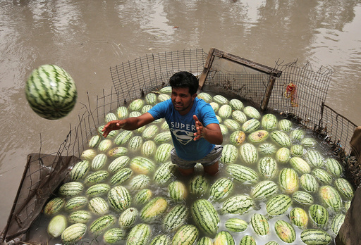 A vendor throws a watermelon that was kept in the waters of a canal to keep the melons cool, towards a customer on a hot summer day in Jammu