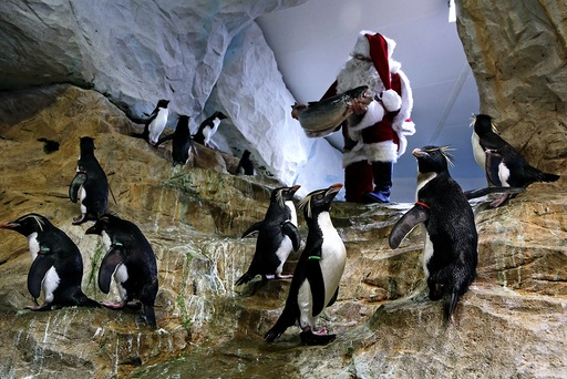 Santa Claus visits animal exhibition park Marineland in Antibes