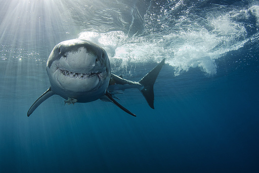 Underwater Photo Contest 2014 Winners