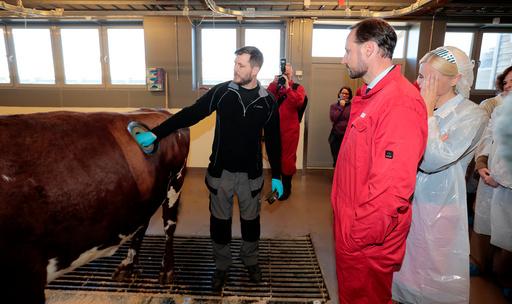 Kronprinsesse Mette-Marit og kronprins Haakon får vist av veterinær Dag-Kristofer Forberg hvordan man åpner koøye på ku med i Teknofjøset.
