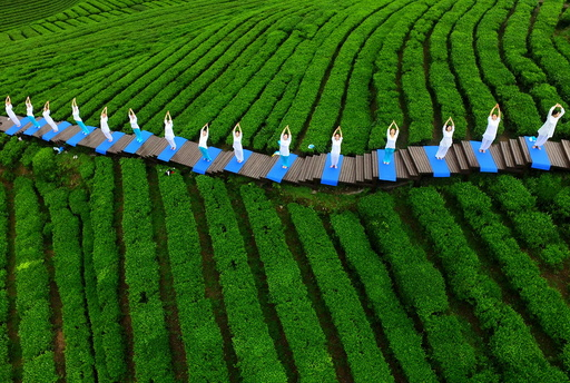 People perform yoga at a tea culture park in Enshi