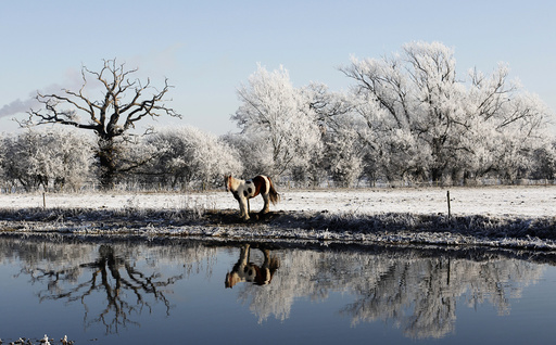 A horse grazes by the river Soar on a frosty morning in Quorn