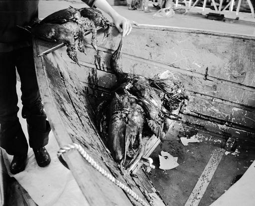 USA. Alaska. Exxon Valdez Oil Spill.