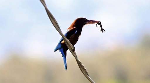 Birds in Nablus City