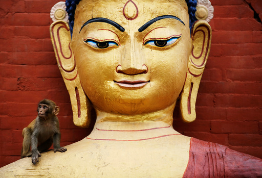 A monkey sits on an idol of Buddha during celebrations on the birth anniversary of Buddha, also known as Vesak Day, in Kathmandu
