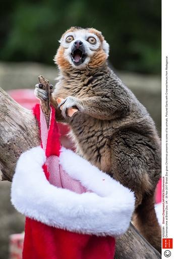 Christmas time at Bristol Zoo, UK - 29 Nov 2017
