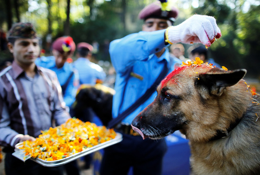 Nepalese police officers worship a dog during Tihar celebrations at the Central Police Dog Training School in Kathmandu