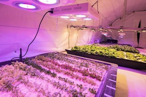 Underground horticulture