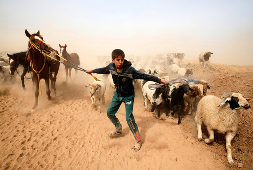 A displaced Iraqi boy leads his animals to safety after escaping from Islamic State controlled village of Abu Jarboa during clashes with IS militants near Mosul
