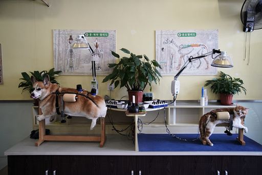 The Wider Image: Acupuncture for cats and dogs