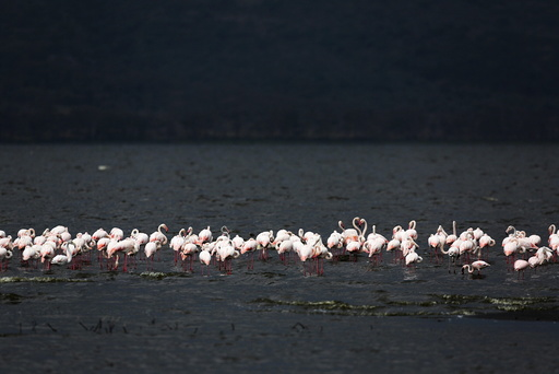 Wider Image: Earthprints: Lake Nakuru